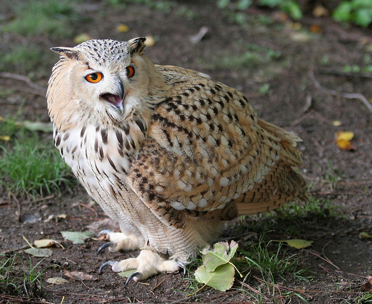fotos de animales por un exelente fotografo