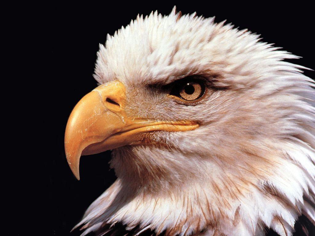Imágenes En HD De Los Mejores Fotos de Animal Planet