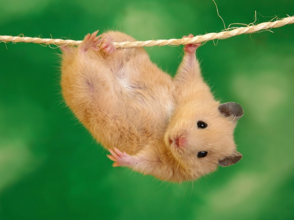 Consejos de un Hamster.