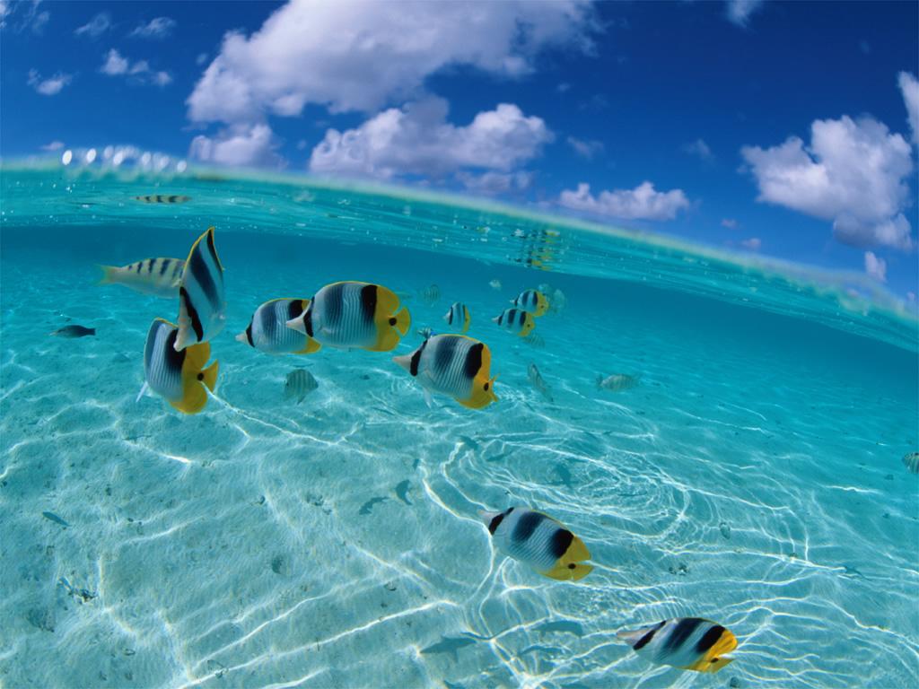 Peces tropicales lindos de ver taringa for Peces tropicales