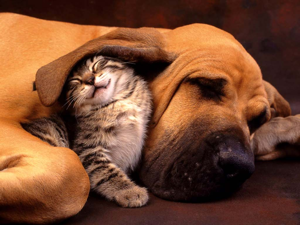 Funny Cute Cats and Dogs