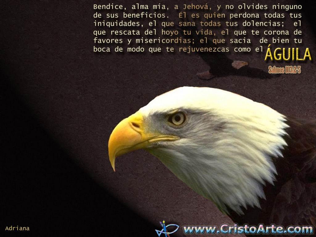 Imagenes Cristianas De Aguilas