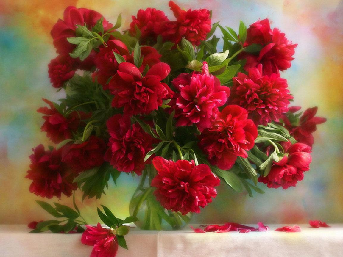 Фото букет цветов тюльпаны